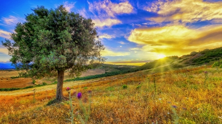 Meadow at sunset - fall, autumn, sun, Italy, sunny, yellow, sunset, beautiful, sky, tree, rays, wildflowers, slope, Calabria, meadow