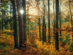 Autumn forest in southern Germany