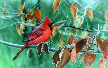 Red Bird in Autumn - leaves, paint, bird, red, green, sitting