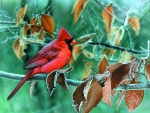 Red Bird in Autumn