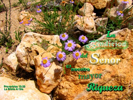 La Bendicion del Senor - stones, wildflowers, rocks, plants, Bible, flowers
