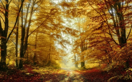 Forest Path - path, forest, autumn, trees