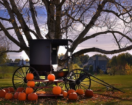 Amish Country in Autumn - Black, Orange, Grass, Buggy, Wheels, Bench Seats, Trees, Farms, Amish Country, Green, Pumpkins, Country, Display, Autumn, House