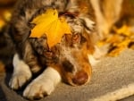 Sweet Dog in Autumn