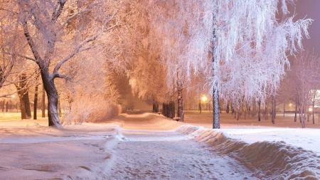 The evening track - Park, Trees, Snow, Winter