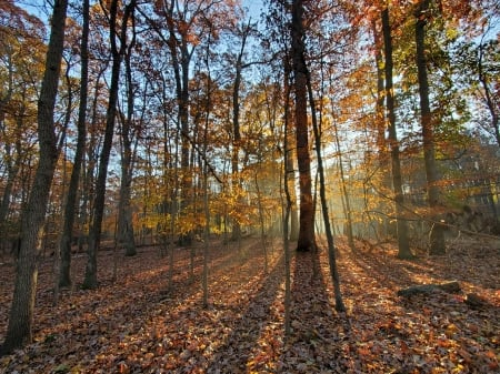 A walk in the woods - Rockville, Maryland - usa, trees, autumn, leaves, shadows, sunrise