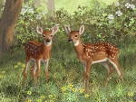 Two young Deers