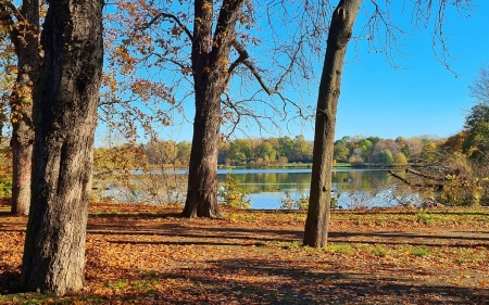 Autumn Lake - nature, autumn, trees, lake