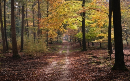 Forest Path in Holland - path, forest, autumn, Netherlands