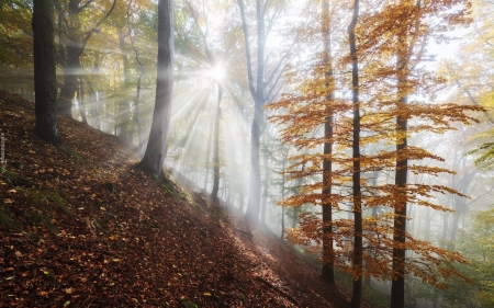 Morning in Forest - autumn, sunrise, trees, forest, sunbeams, hill