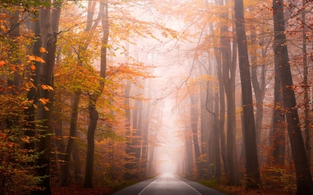 Misty Forest Road - forest, autumn, road, mist, trees