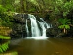 A temperate rainforest waterfall in Tasmania, Australia
