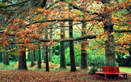 the farewell of summer - bench, autumn, park, trees