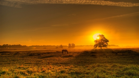 Golden Landscape in Northern Germany - sunset, sun, horse, meadow, sky