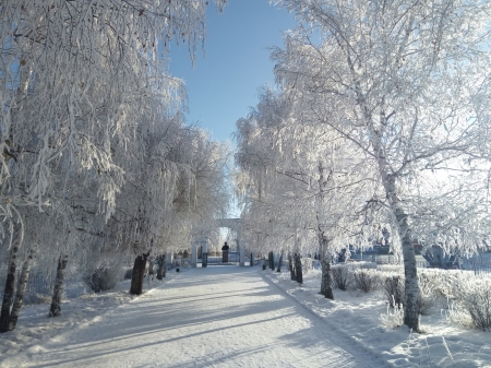 Early Winter in the Park - path, ice, snow, trees, sky
