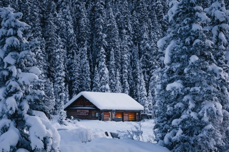 Cozy Cabin in Banff National Park, Canada - alberta, trees, snow, firs