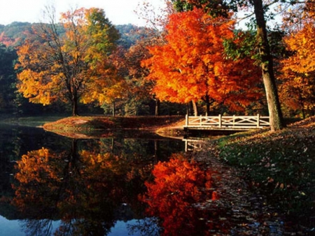 Autumn at the Lake - leaves, autumn, trees, fall, colorful, lake