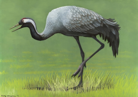 common crane - bird, common, animal, crane