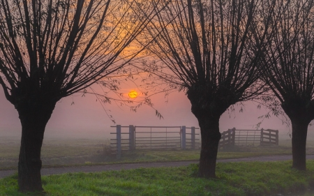 Willows at Sunrise - mist, fence, autumn, willows, sunrise, trees, field