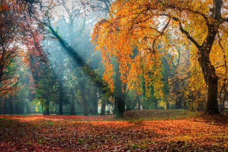 Autumn park - fall, autumn, leaves, rays, park, beautiful, branches, foliage