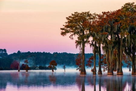 Fall in Tallahassee, Florida - usa, mist, autumn, colors, cypresses, sunset