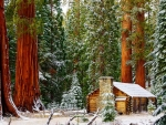 Mariposa Grove - a trip to see the Giant Sequoias of Yosemite National Park
