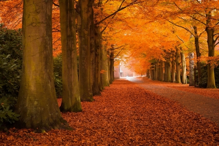 Autumn park - foliage, fall, autumn, beautiful, park, walk, trees