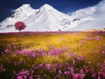 Pink petaled flower field near ice covered mountain