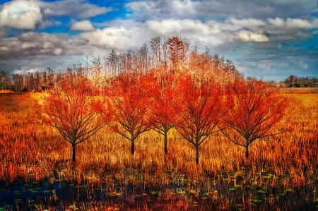 Autumn Cypress - fall, colors, leaves, trees, clouds