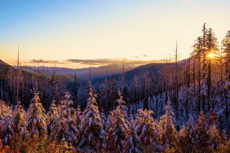 First snowfall in the Klamath Mountains, Oregon - sky, snow, usa, trees, landscape