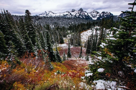 Fall meets Winter in Mount Rainier National Park, Washington - trees, snow, usa, leaves, mountains, colors