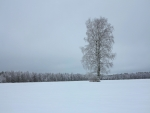 Winter Tree Alone