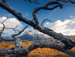 Dead Tree - Torres del Paine NP, Chile