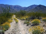 Hiking trail at Harquahala in Maricopa County, Arizona