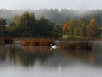 Lake with Swan