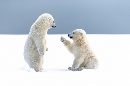 Hi! - cute, urs, cub, polaris bear, iarna, winter, couple
