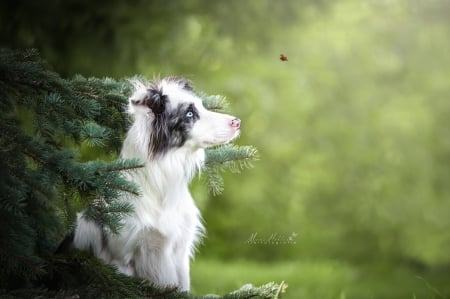 :) - caine, green, border collie, dog, ladybug