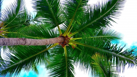 Palm Tree - photography, nature, tree, palm