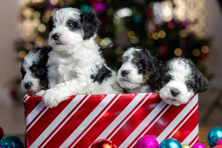 Christmas puppies - cute, red, craciun, christmas, caine, gift, puppy, dog