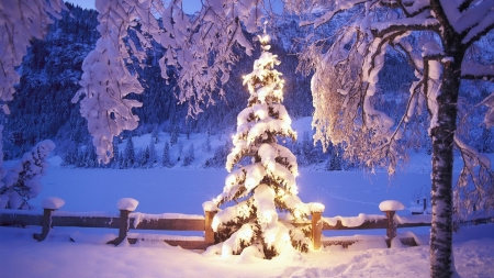 Christmas time - fence, tree, snow, light