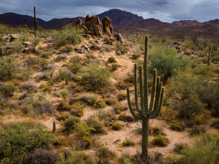 Stormy Arizona Day - plants, hills, usa, cactus, sky, clouds, landscape
