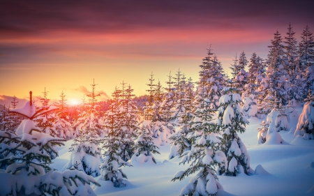 Winter Sunset - colors, sky, snow, firs, clouds