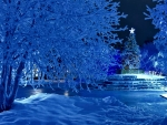 Winter Night at Christmas Time