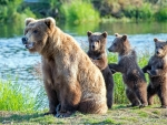 Momma Bear and her 3 Cubs