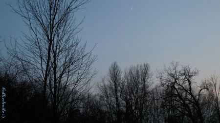 My Happy Place :D - forest, moon, crescent m00n, crescent, nature, clearing, trees