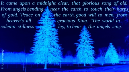 An Old Christmas Carol for 2020 - Carol, Christmas, Song, pine trees, blue, dark blue