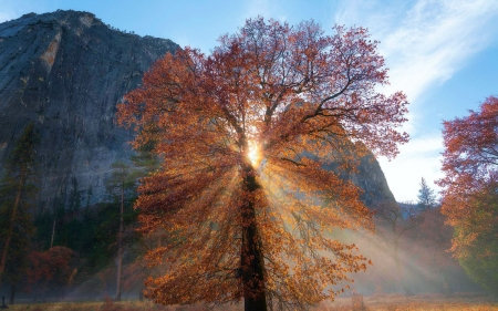 Yosemite Valley Light, California - tree, sun, sunrays, usa, autumn