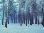 Mystical winter forest, Ringerike, Norway