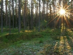 Sunrise in a Swedish forest