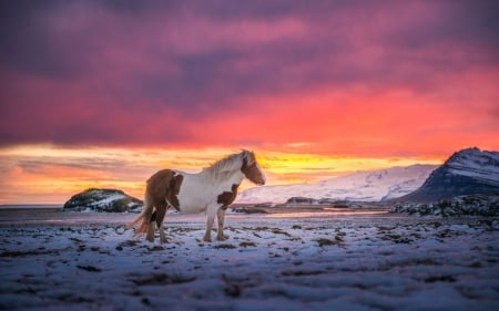 Iceland Horse - sky, snow, winter, sunset, clouds, landscape